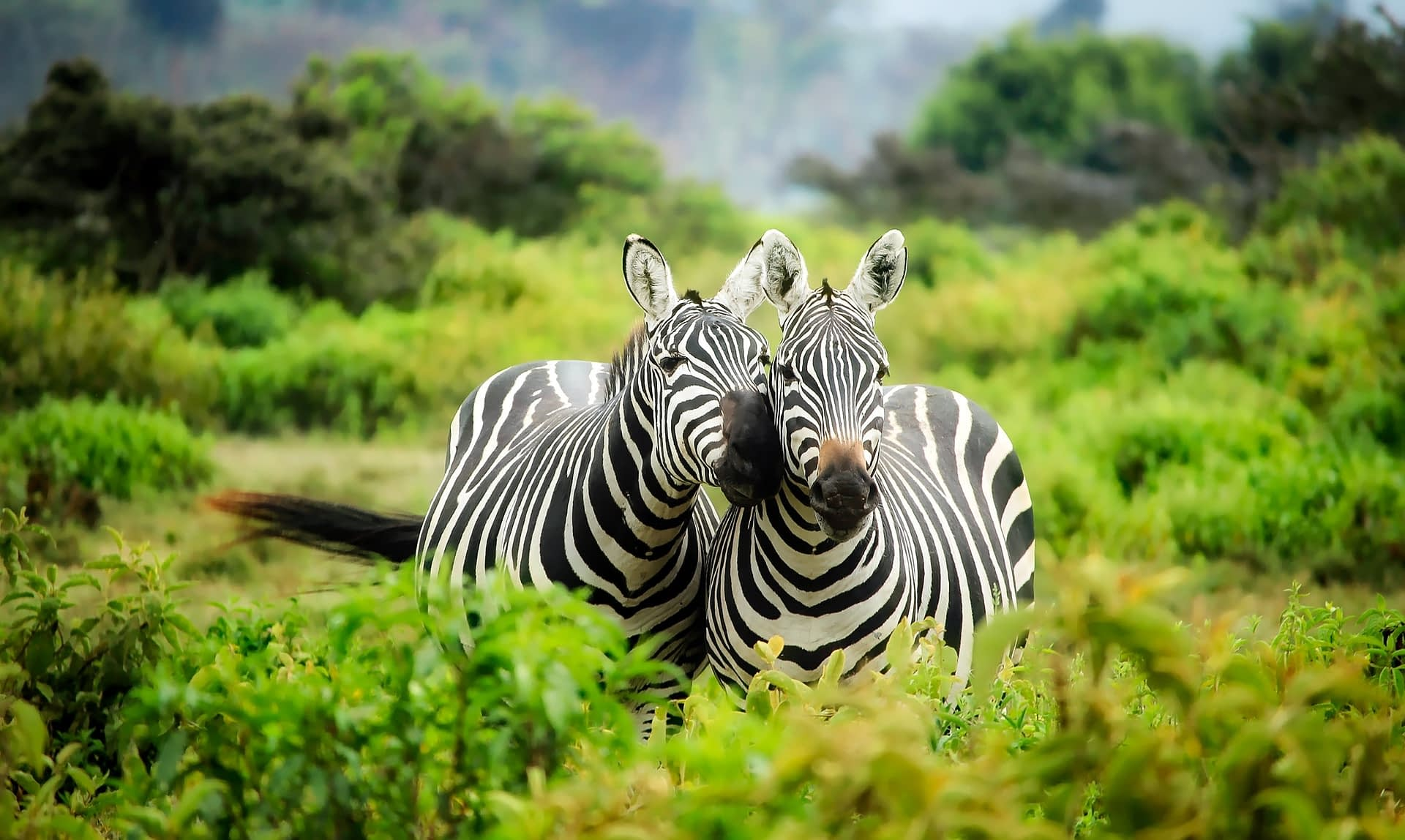 zebra service partners