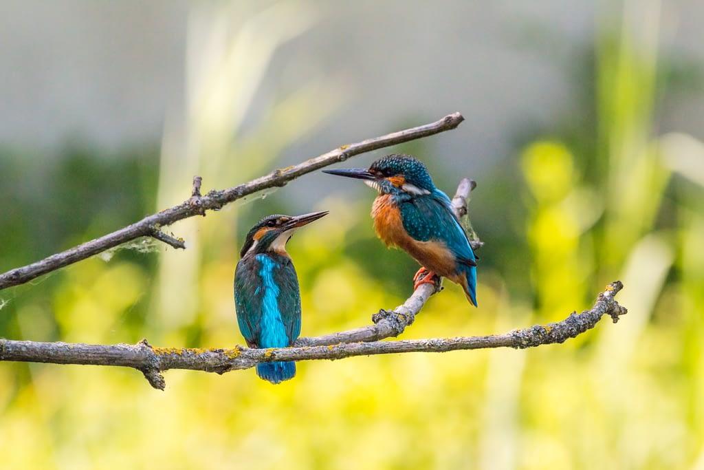 birds content partner